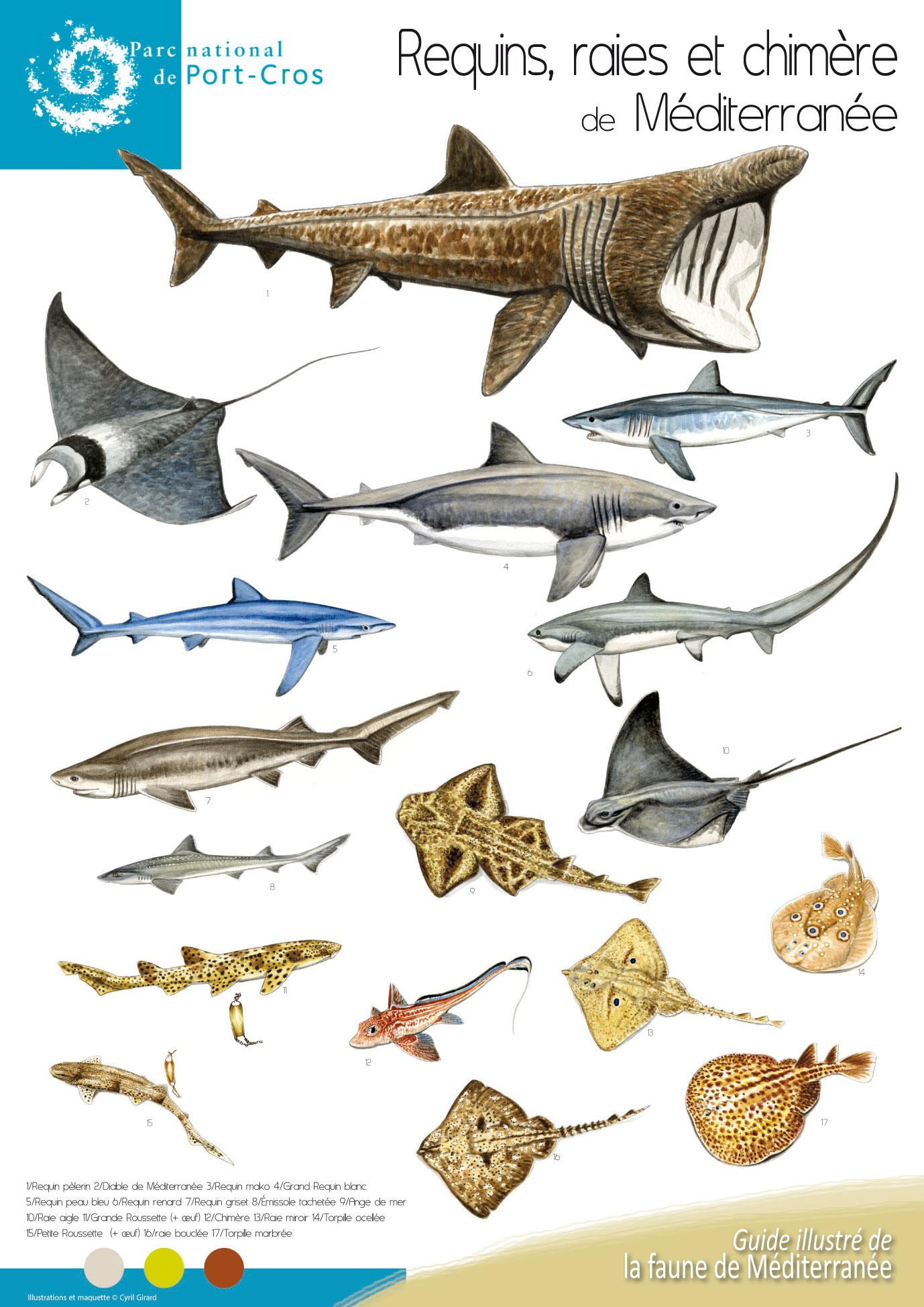 Requins et raies