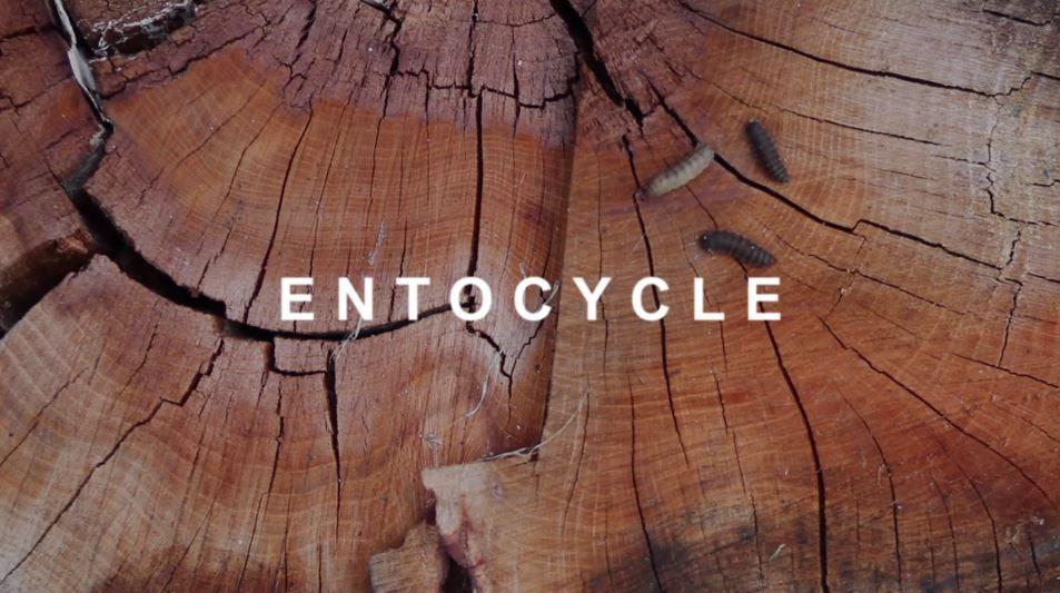 Entocycle wood background